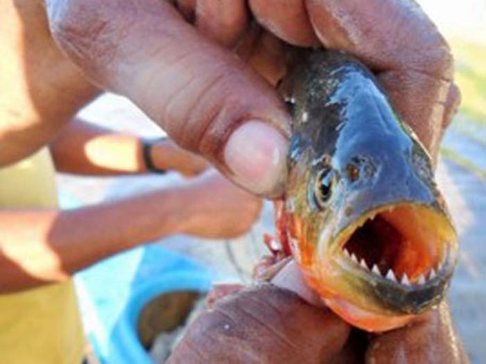 Cinco banhistas foram feridos por piranhas na barragem do Bezerro na tarde deste domingo (22)